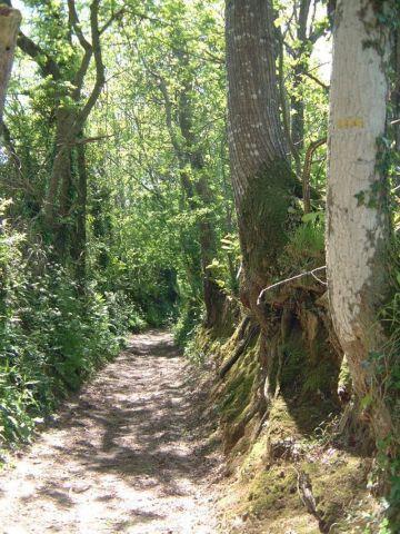 Promenade en forêt à Clohars carnoet en bretagne